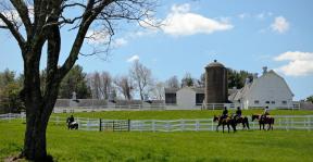 Horse Guard - photo by Rhonda Cullens